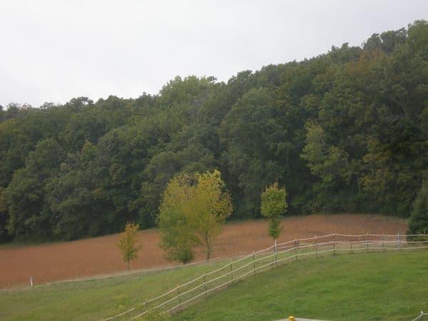 Horse-pasture_-_DL_Daniels_2009