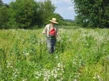 Paul Boutwell overseeds native grasses into native forbs in an area that did not have a good balance of grasses and forbs
